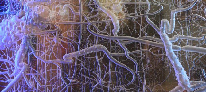 Photo of a digram of neurons
