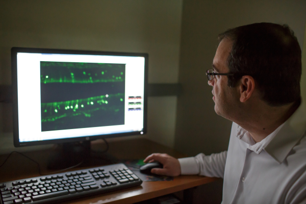 doctor steven munger analyzing data in the lab