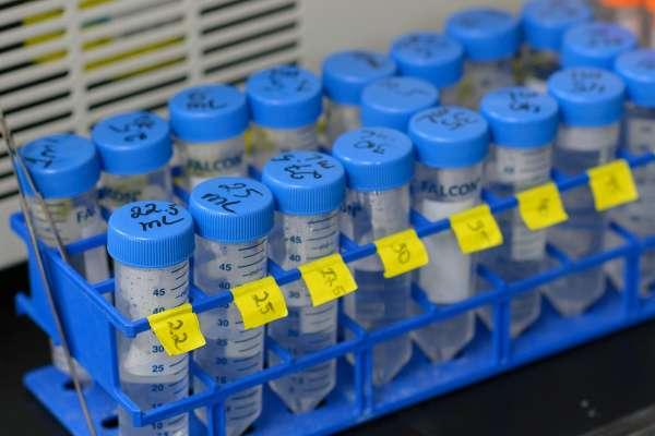 Nobel immunotherapy