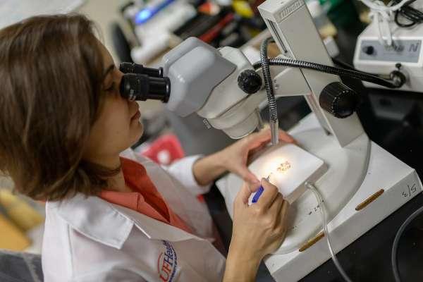 Dr. Lorena de Mena Alvarez