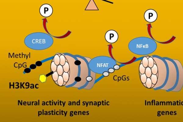 epigenetics 1