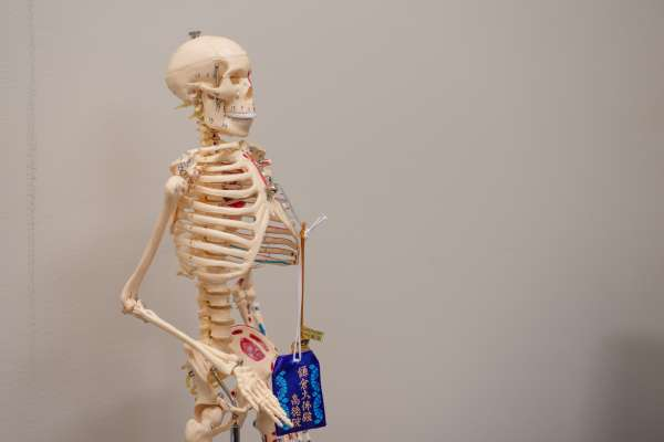 Informational skeleton hanging in her office